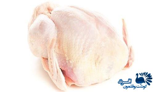 صادرات گوشت بوقلمون