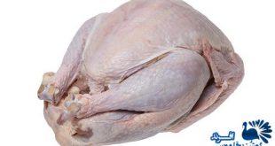 خرید گوشت بوقلمون طبیعی