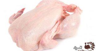 قیمت گوشت بوقلمون ارگانیک