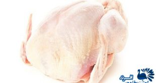 فروش گوشت بوقلمون پرکنده