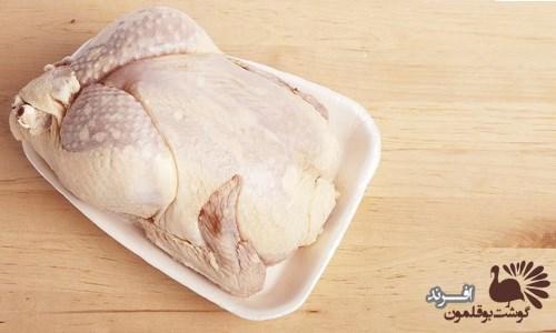 پرورش صنعتی بوقلمون گوشتی