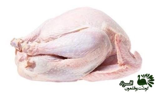 قیمت گوشت بوقلمون گرم