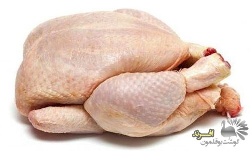 عرضه گوشت بوقلمون کشتار روز