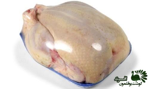 مرکز فروش محصولات پروتئینی بوقلمون با کیفیت