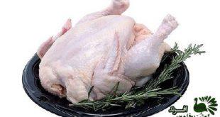 گوشت بوقلمون کشتار روز