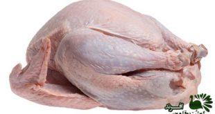 خرید گوشت بوقلمون فراوری